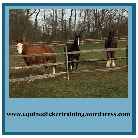 www.equineclickertraining.wordpress.com